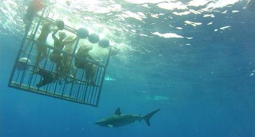 shark-encourtes-hawaii-north-shore-carol-valiante-blog-dicas